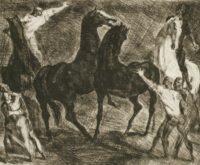 Combat de chevaux